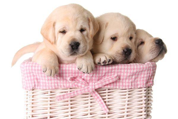 Valutare spazi e tempo da dedicare al cucciolo
